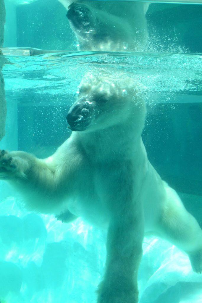 Zoo d'Ueno - un ours polaire