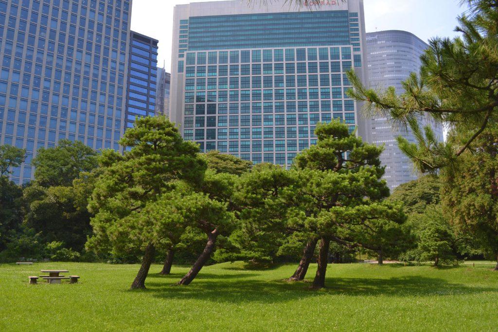 Le jardin Hamarikyu