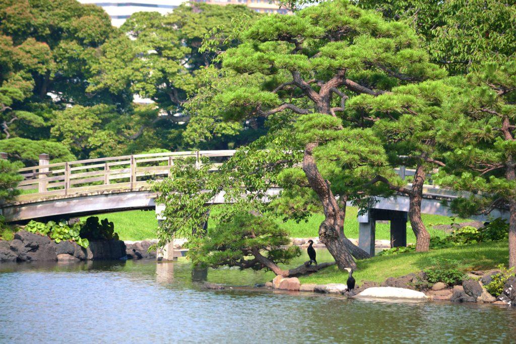 Pont du Jardin Hamarikyu de Tokyo