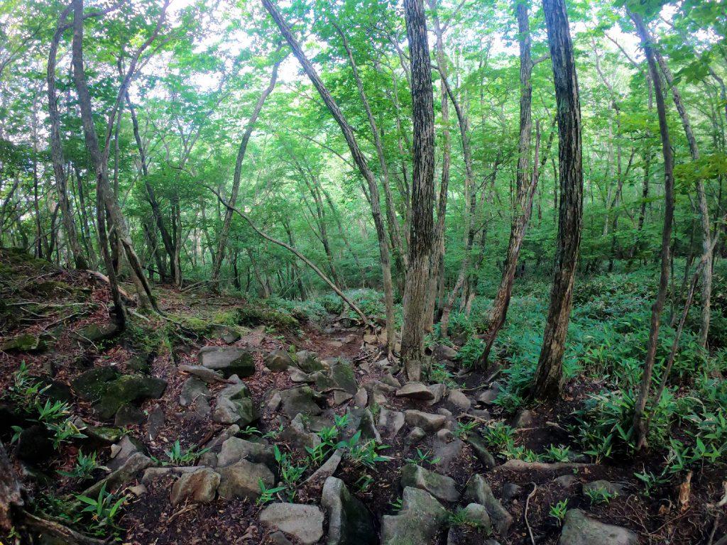 La montée forestière vers le mont Kurobi