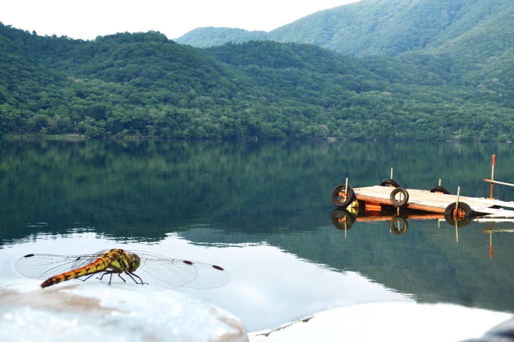 Une libellule sur le lac Onuma