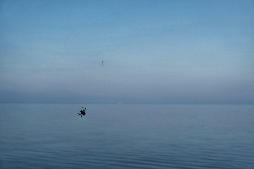 Une araignée en bord de mer