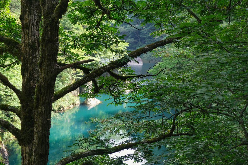L'eau des gorges de Dakigaeri à travers les arbres
