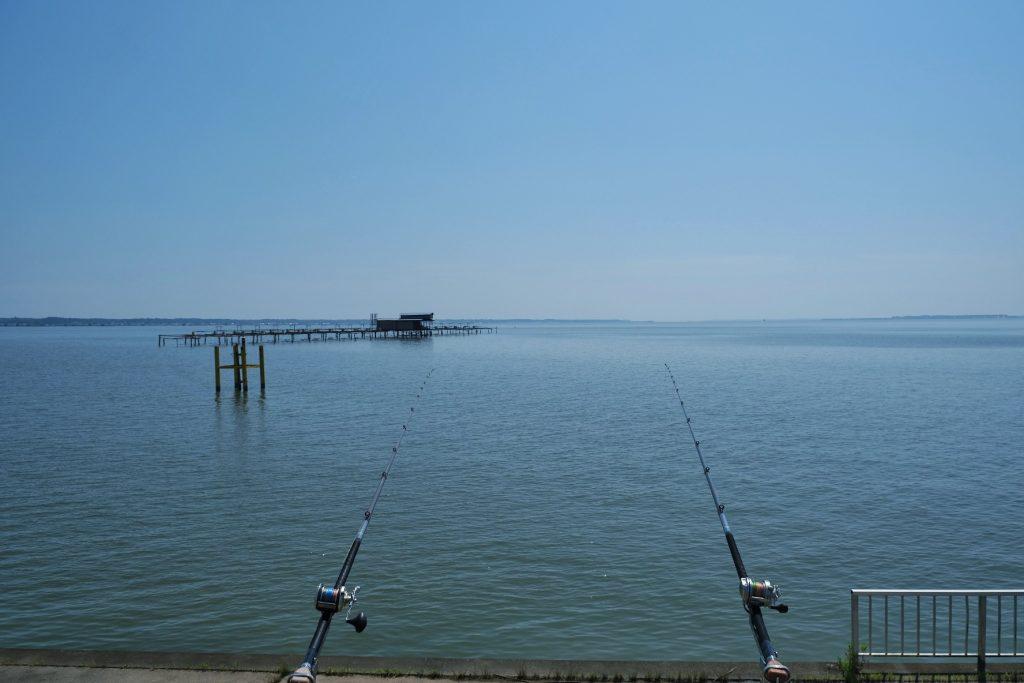 Cannes à pêche au bord du lac Kasumigaura