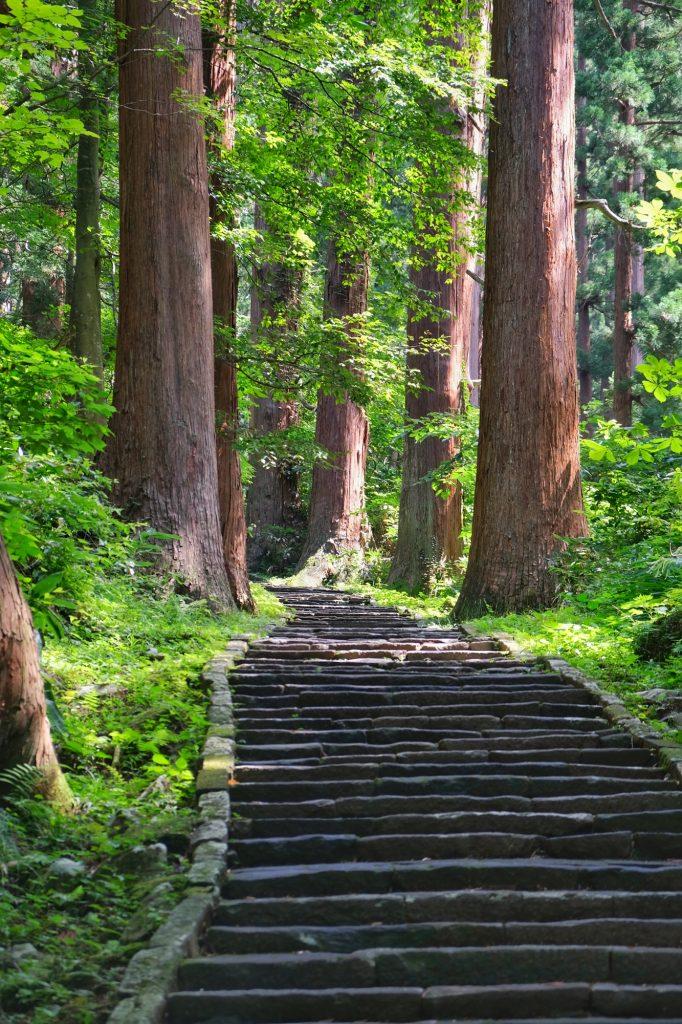 Les cèdres bordent le sentier du Mont Haguro