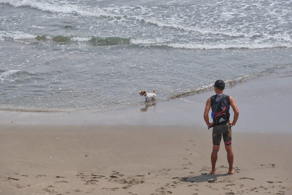 Un chien et son maître profitent du bord de mer