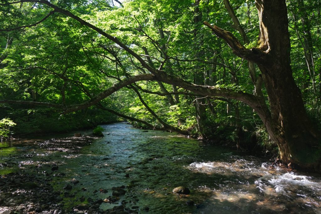 Les eaux (parfois) calmes de la rivière Oirase