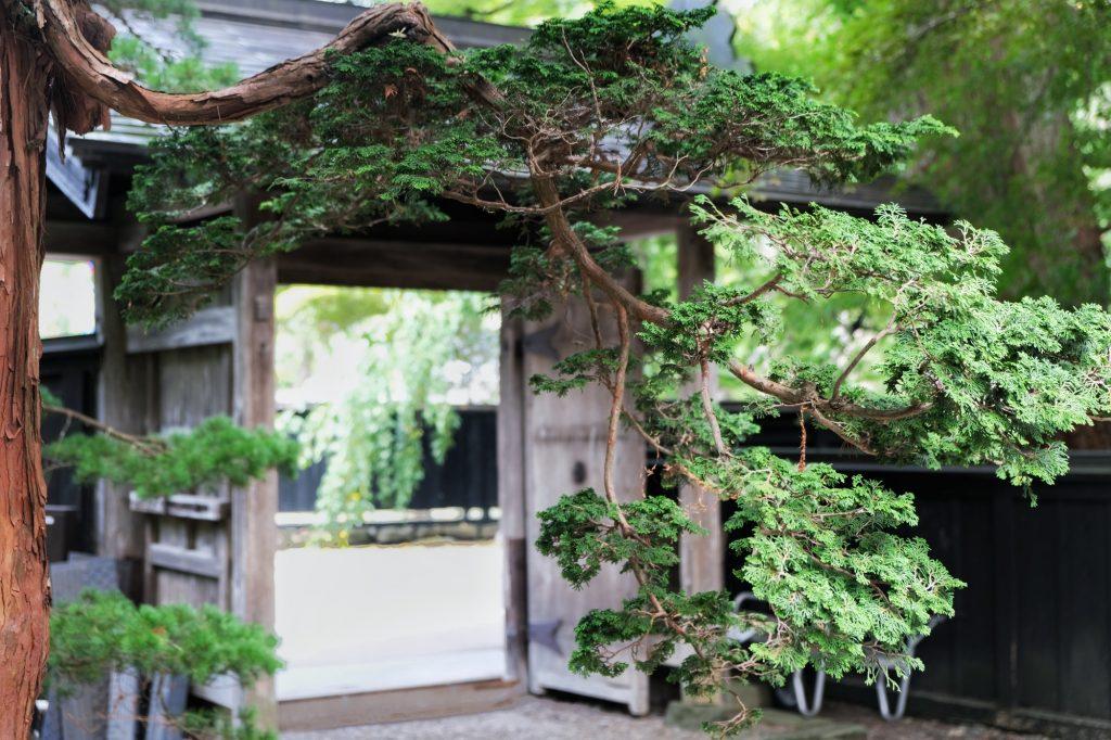 L'entrée de la maison Ishiguro