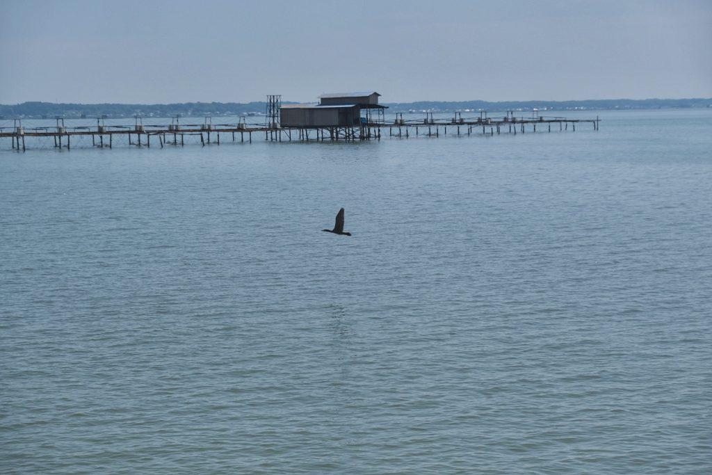 Un oiseau prend son envol au dessus du lac Kasumigaura