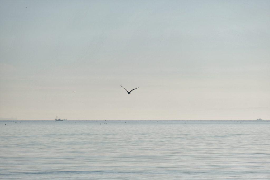 Un oiseau vole dans les premières lueurs de la journée