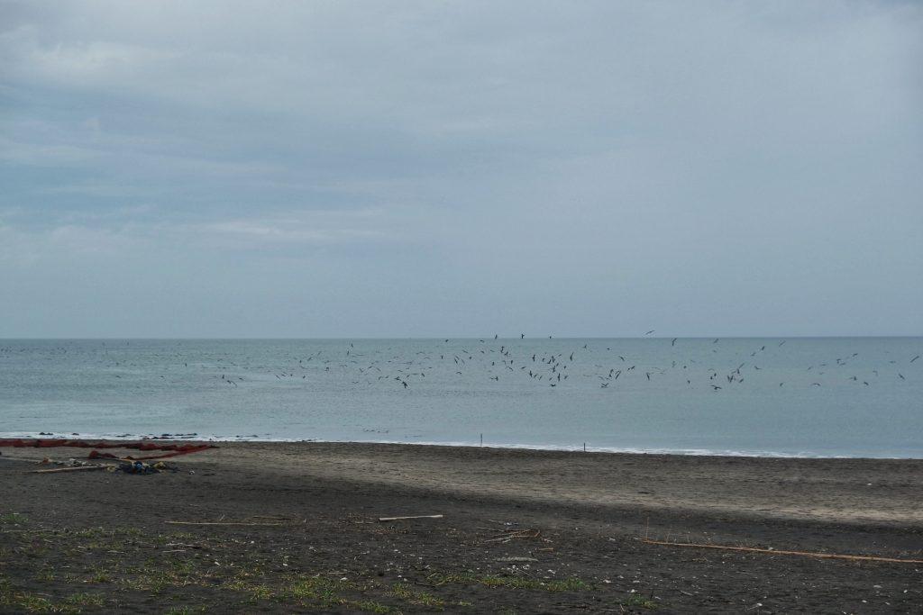 Des oiseaux s'envolent au dessus de la mer - péninsule de Chiba