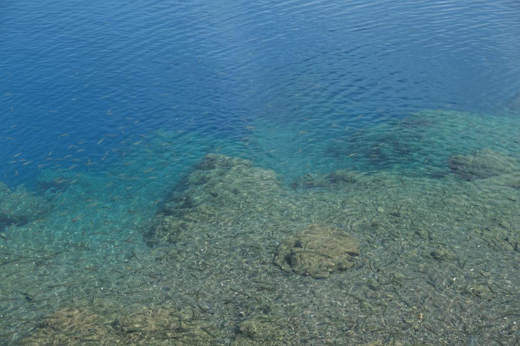 Les poissons dans les eaux bleues du lac Tazawa