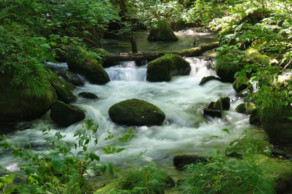 Des rapides dans la rivière Oirase