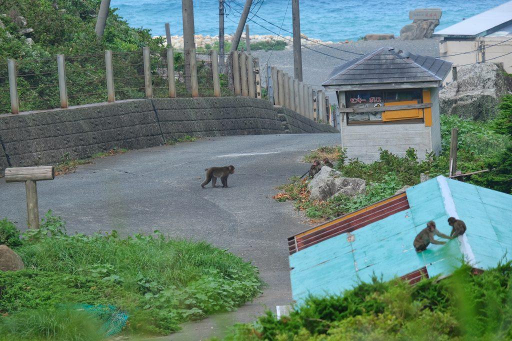 Le parc protégé pour les singes dans la péninsule d'Izu