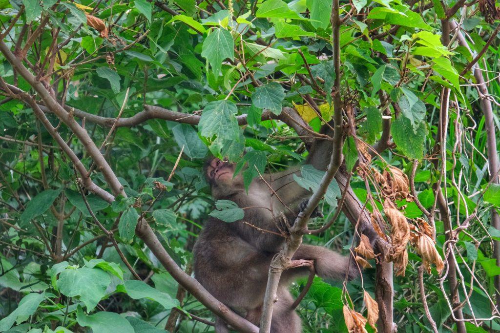 Un singe caché dans les arbres dans la péninsule d'Izu