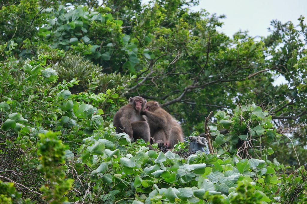 Deux singes dans un arbre dans la péninsule d'Izu