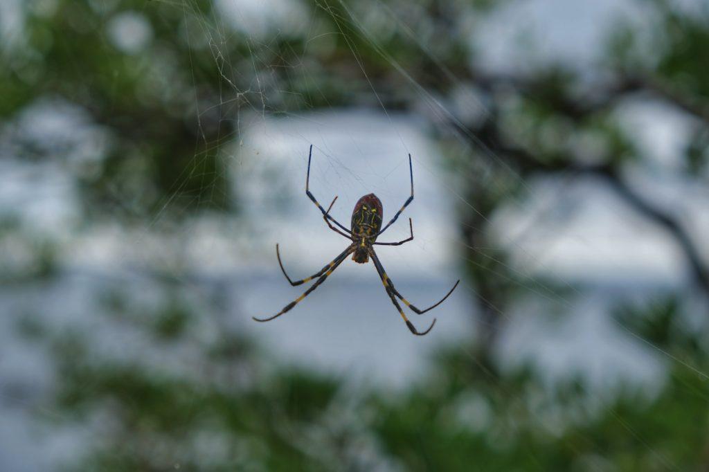 Une araignée sur la route entre Kanazawa et Kyoto