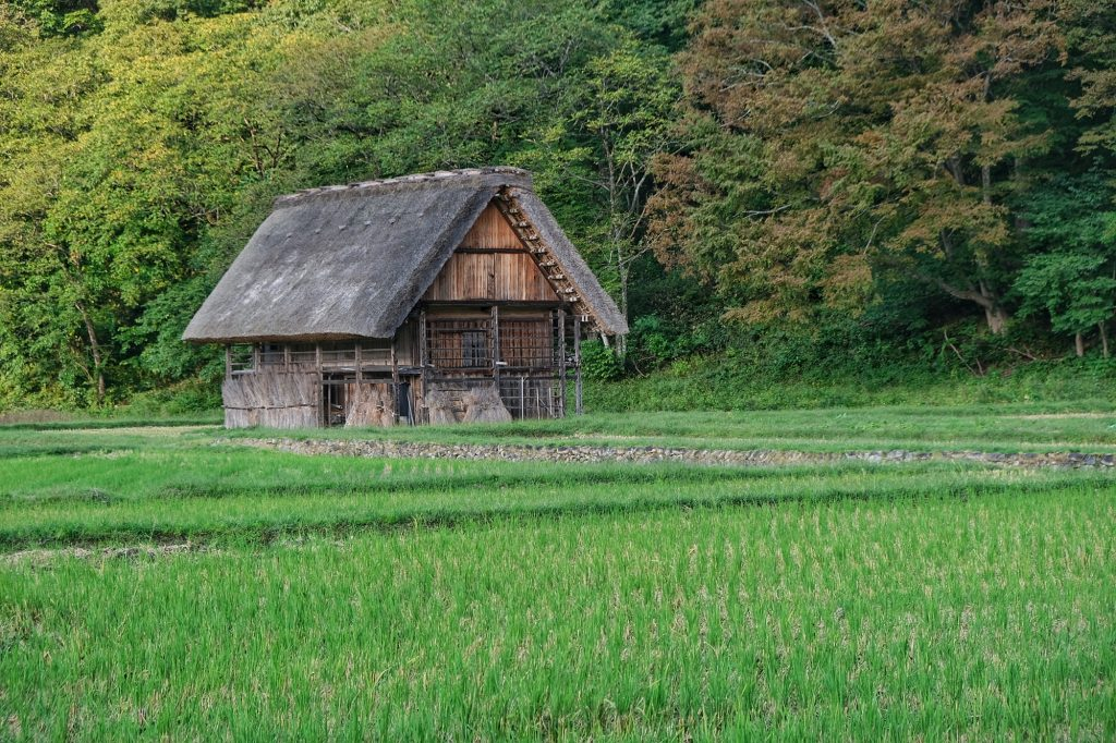 Maison et rizière à Ogimachi, Shirakawa-Go