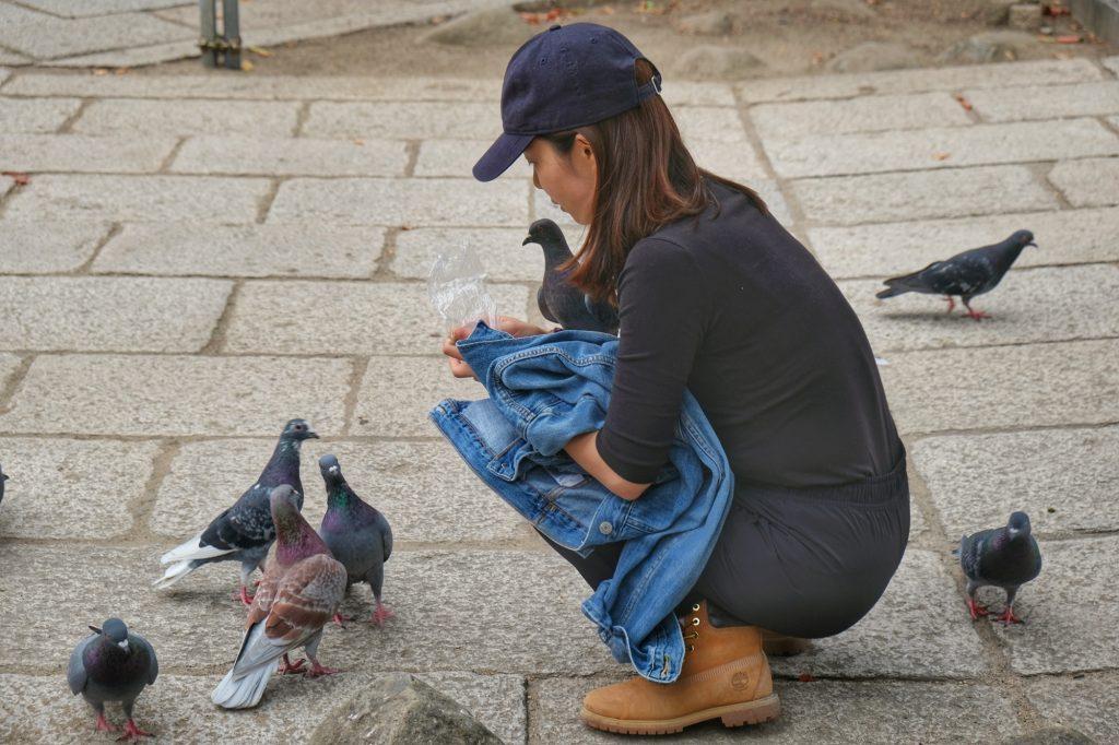 Une dame nourrit les pigeons de Matsumoto
