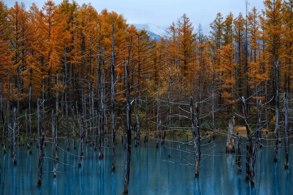 Les arbres autour de l'étang bleu