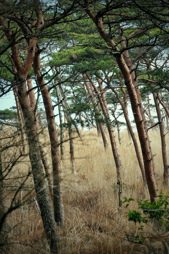 Ambiance savane sur le plateau d'Ebino