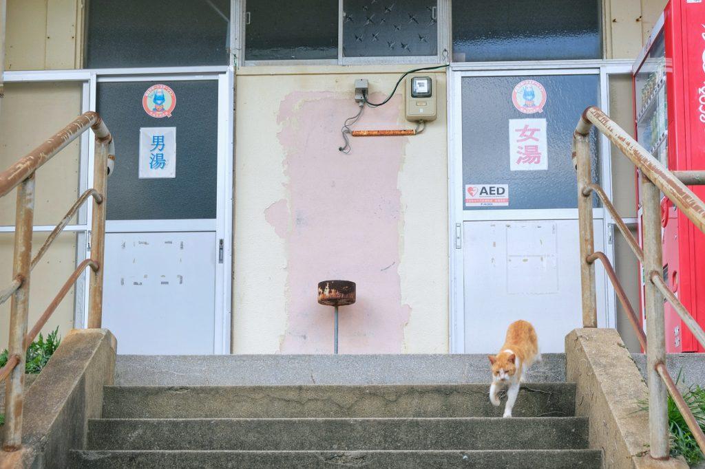 Un chat devant l'onsen toujours en activité d'Ikeshima