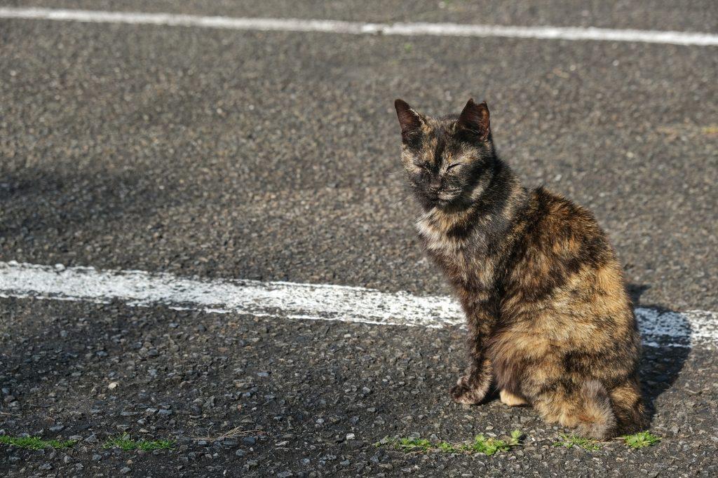 Un chat près d'une sorte de refuge sur le cap Muroto