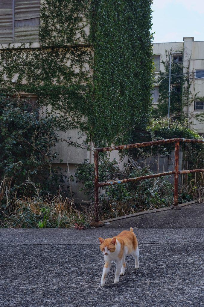 Un chat dans les rues à l'abandon de l'île d'Ikeshima