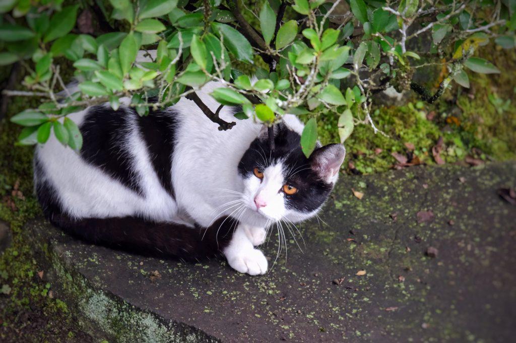 Un chat au Suizenji koen de Kumamoto
