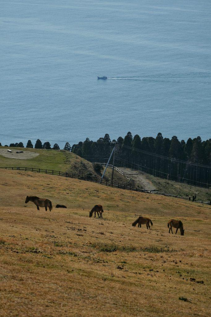 Les chevaux du cap Toi devant la mer et un bateau