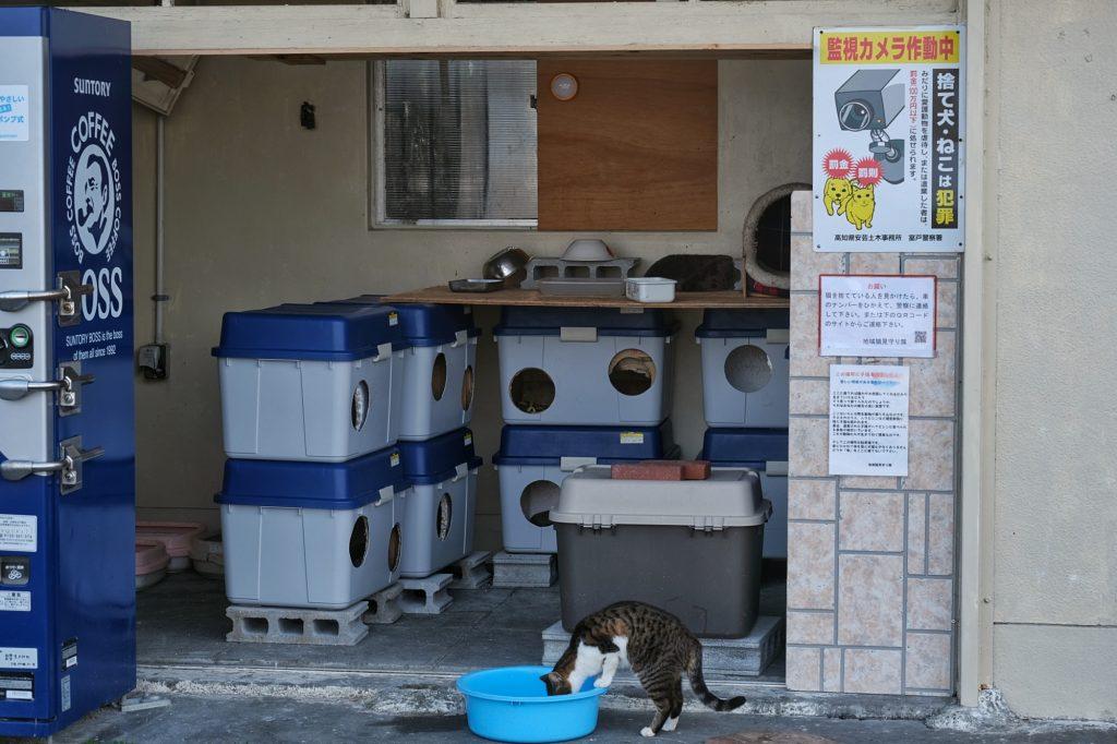 Un espace protégé et surveillé pour les chats sauvages du cap Muroto
