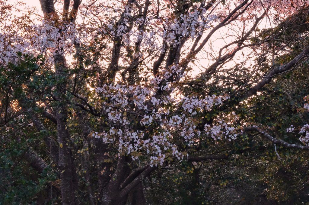 Le printemps commence à montrer le bout de son nez au camping d'Izakibana