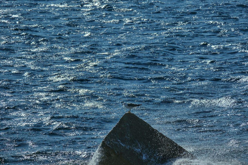 Une mouette sur un bloc de béton au large d'Ikeshima