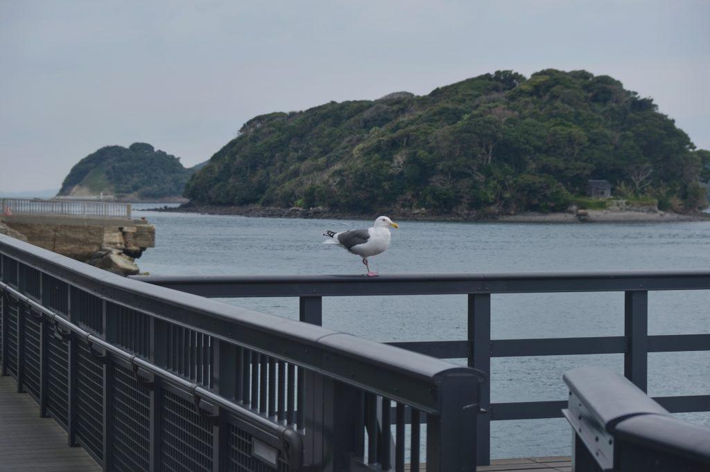 Une mouette sur un quai de la ville de Hirado