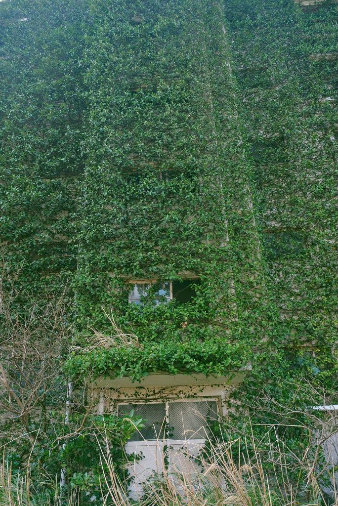 Un mur recouvert par la végétation sur Ikeshima