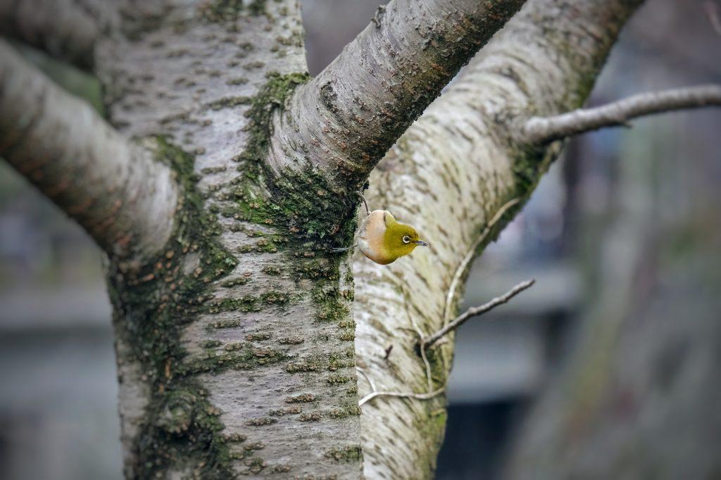 Un oiseau dans un arbre près du château de Kumamoto