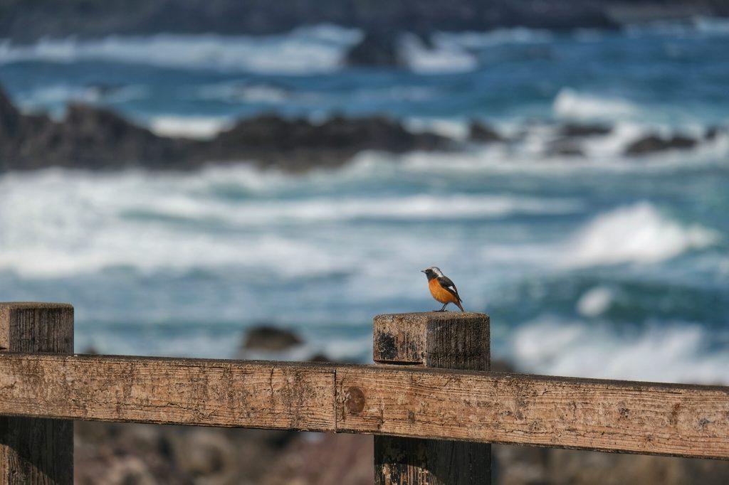 Un oiseau au bord de l'océan Pacifique, préfecture de Kochi