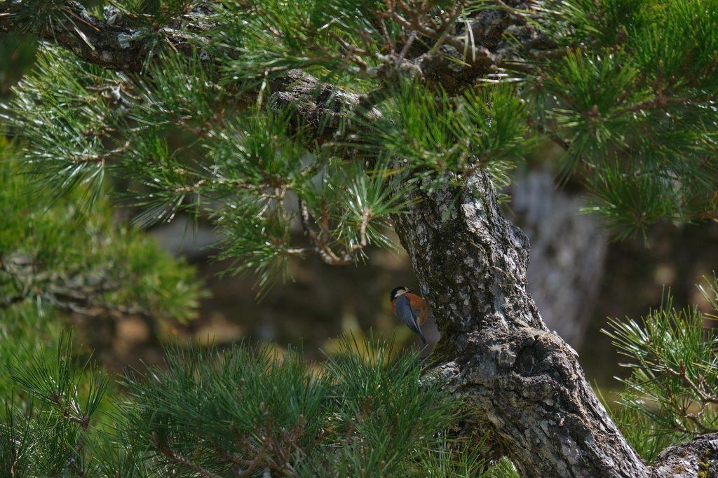 Un oiseau sur une branche dans le parc Onshi à Hakone
