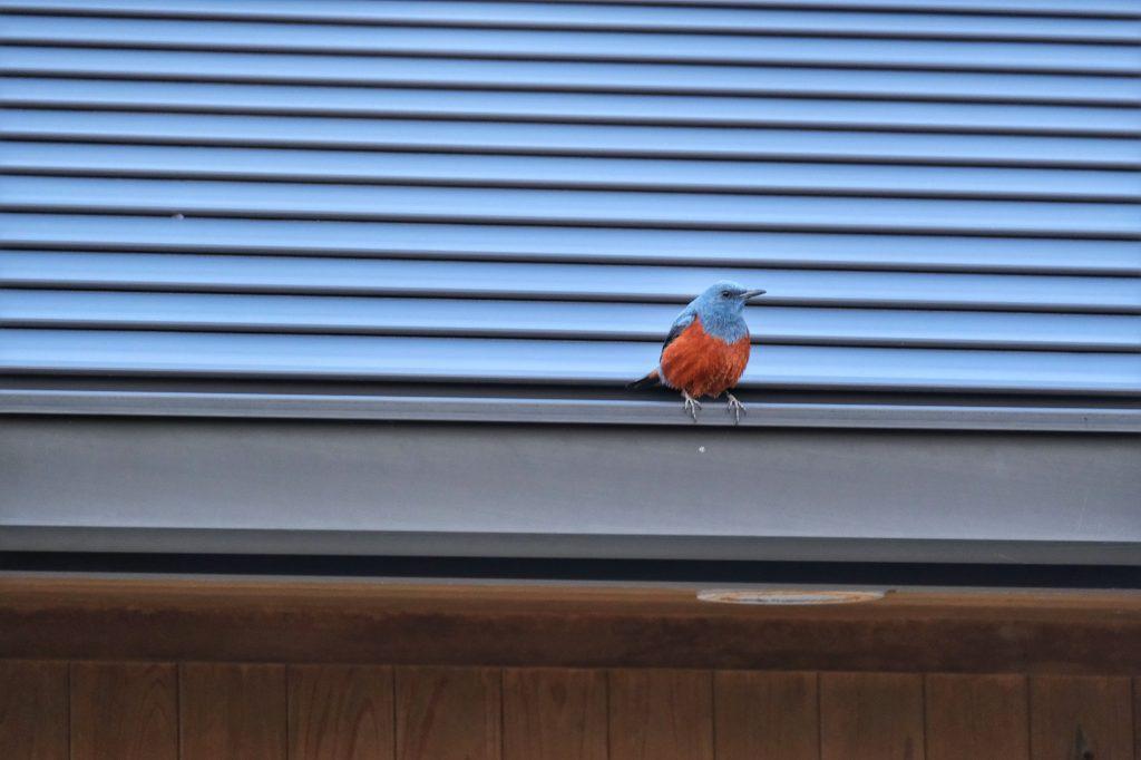 Un oiseau sur un toit sur l'aire de repos de Kiramesse Muroto