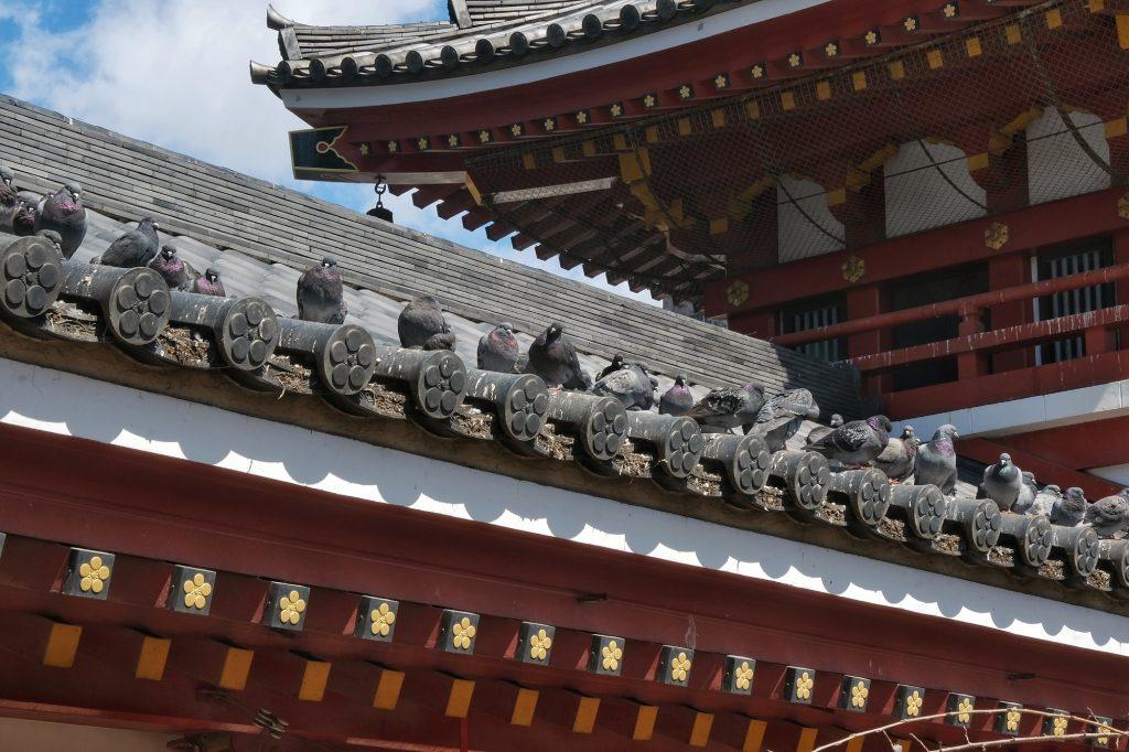 De nombreux pigeons sur les toits de l'Osu Kannon