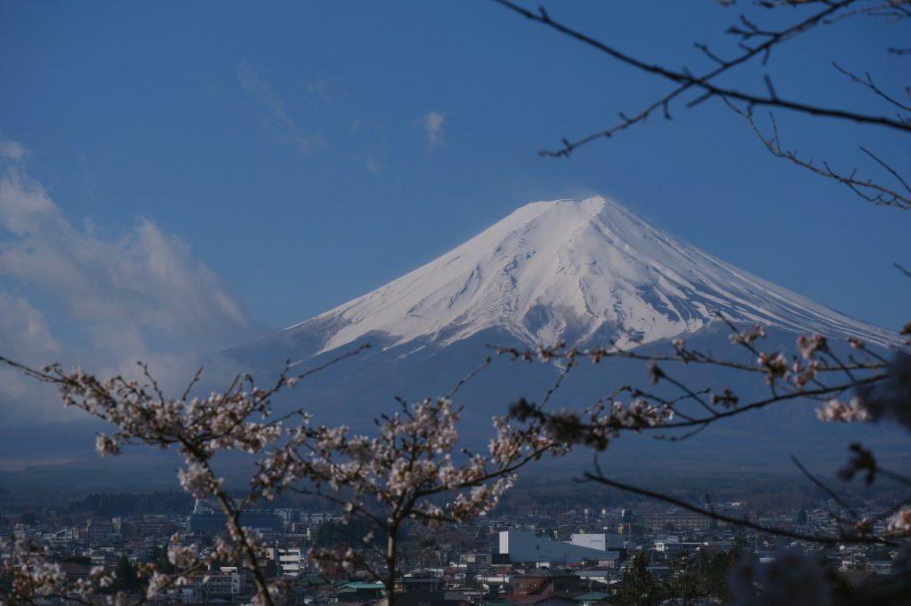 Le mont Fuji derrière (quelques) fleurs de cerisiers