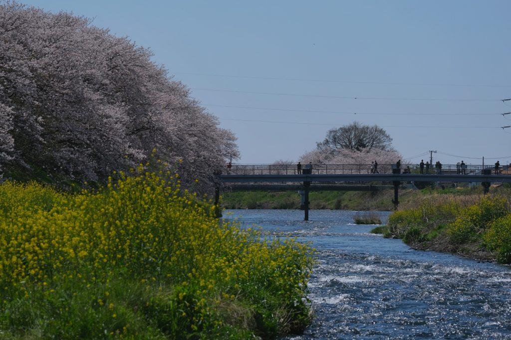 Les bords de la rivière Urui à Fuji