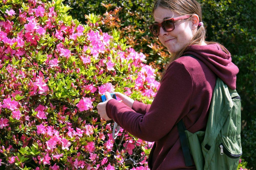 Claire filme les fleurs roses au Shinjuku Gyoen