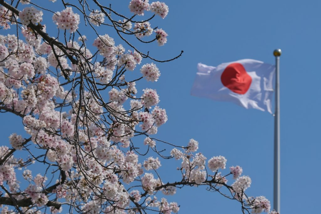 Drapeau japonais et cerisiers en fleur à Fujinomiya