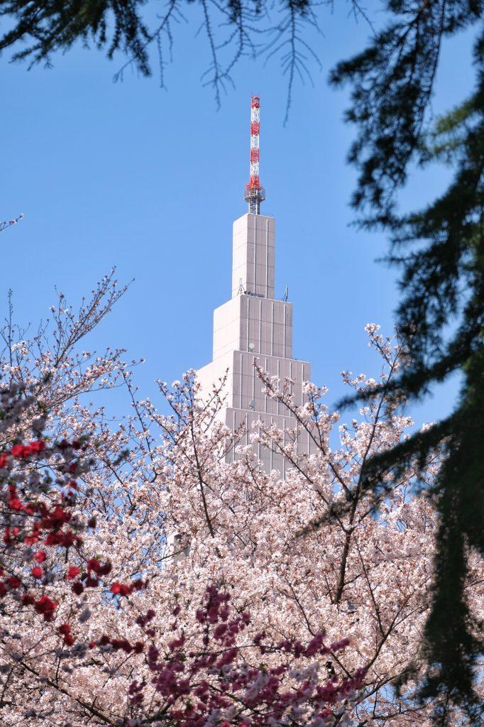 L'immeuble de Docomo dépasse des fleurs roses et blanches du Shinjuku Gyoen
