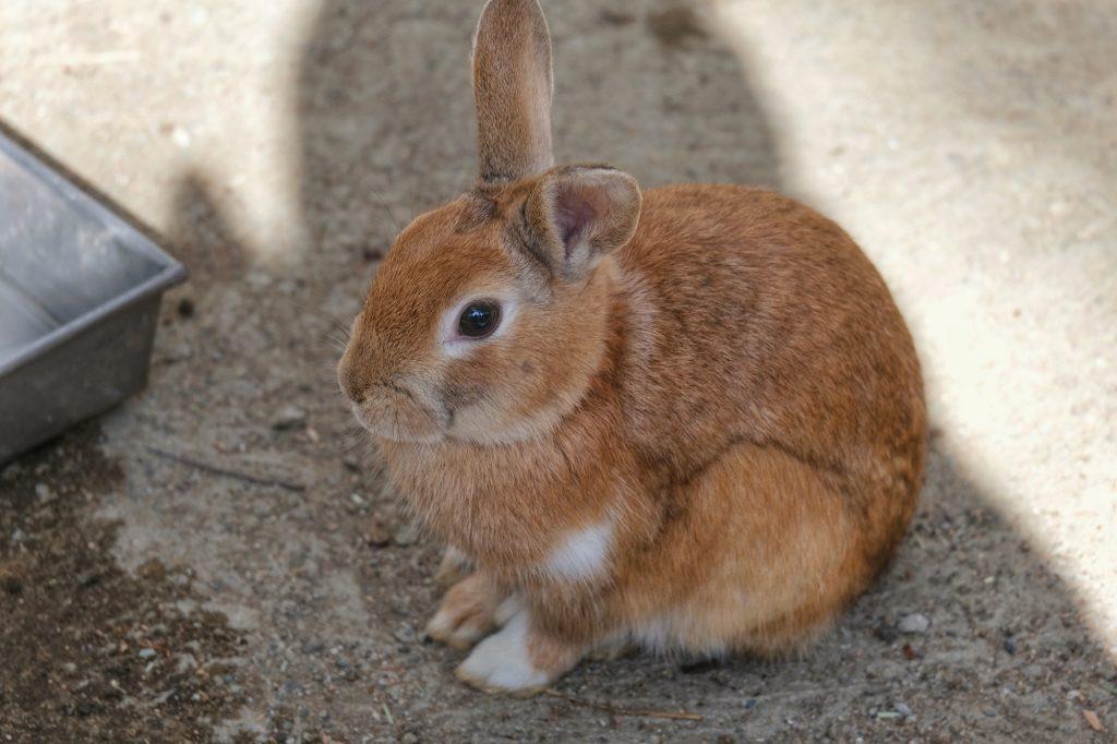Un lapin, autre pensionnaire du Zao Fox Village