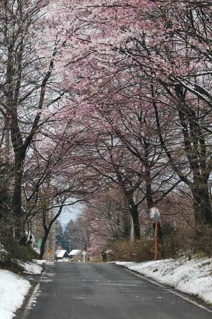 La neige s'invite sur le chemin du retour