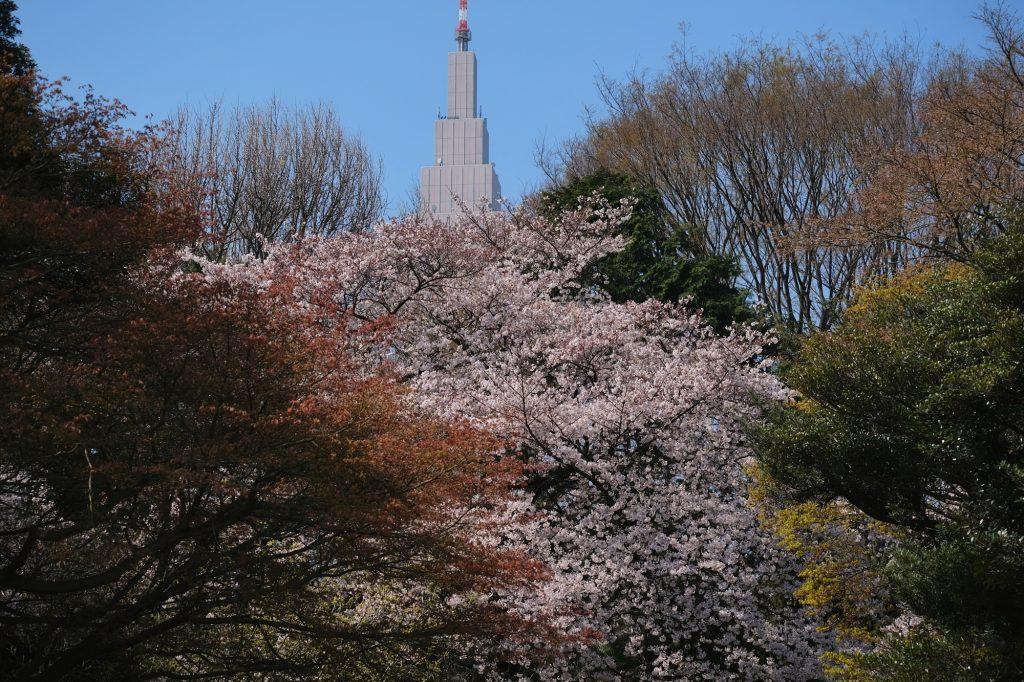 L'Empire State Building local dépasse des arbres du Shinjuku Gyoen