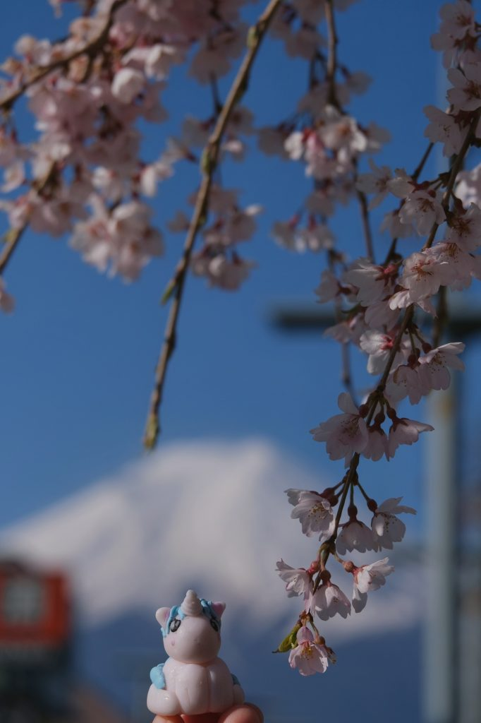Stélie profite de Hanami sous les sakura