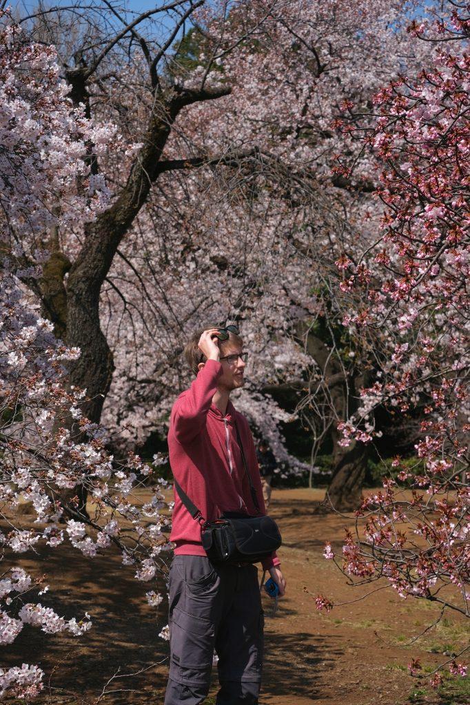 Vincent observe les cerisiers en fleurs du parc de Shinjuku